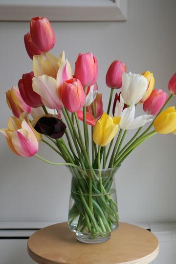 Flores naturales para alérgicos