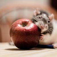 Proton RAT, otra demostración de que macOS es muy seguro pero no completamente seguro