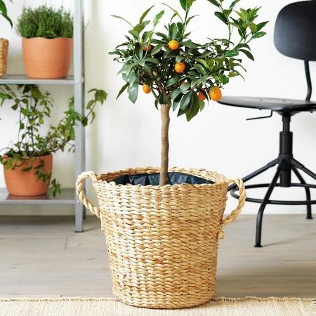 Botanisk Plant Pot 0840316 Pe778674 S5