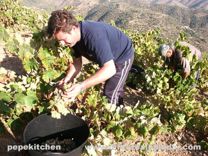 La vendimia en los montes de Málaga
