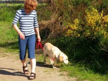 Tener un perro como mascota ayuda a ser más activos