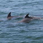 Los delfines también tienden a hacerse amigos de otros delfines que tienen intereses comunes