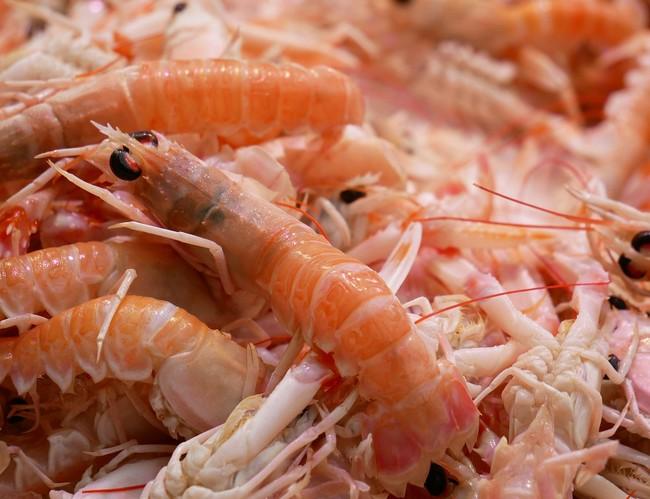 Shrimp 2331239 1280