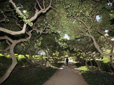 Los jardines del Palacio de Marivent en Mallorca abiertos al público desde hoy