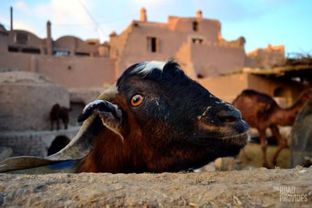 Garmeh, un oasis en el desierto iraní