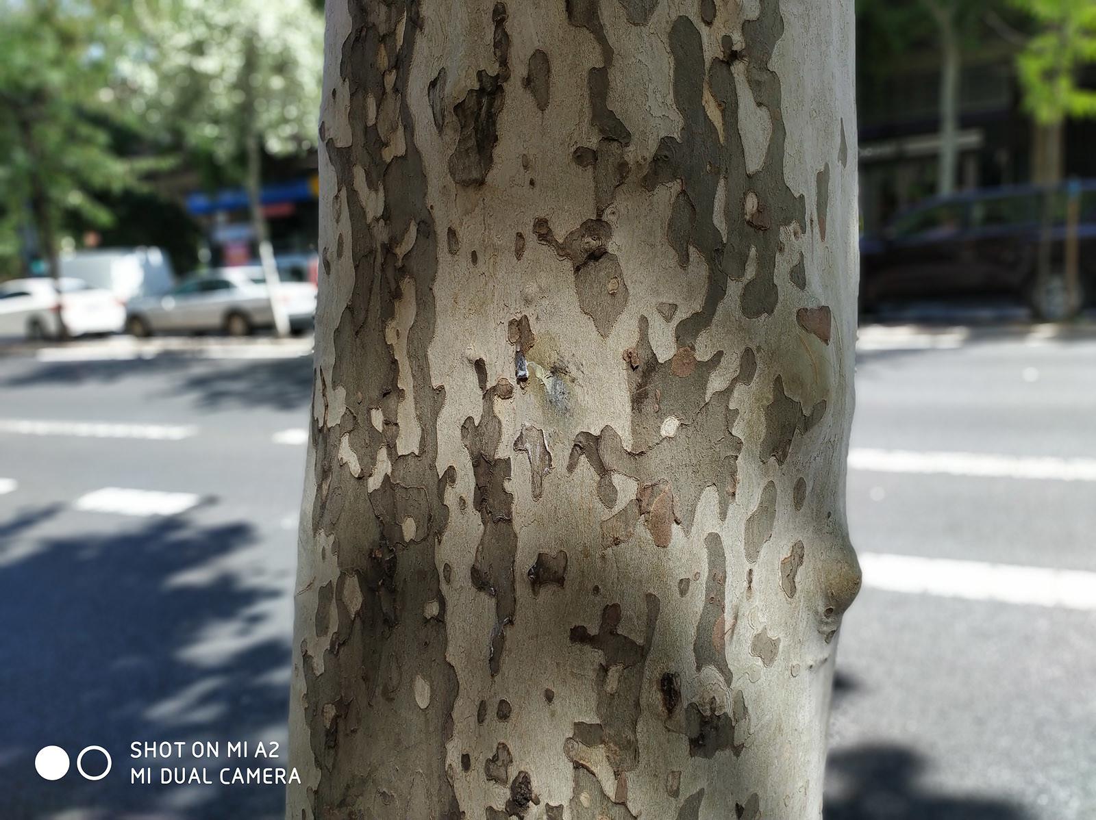 Foto de Xiaomi Mi A2, fotografías (21/28)
