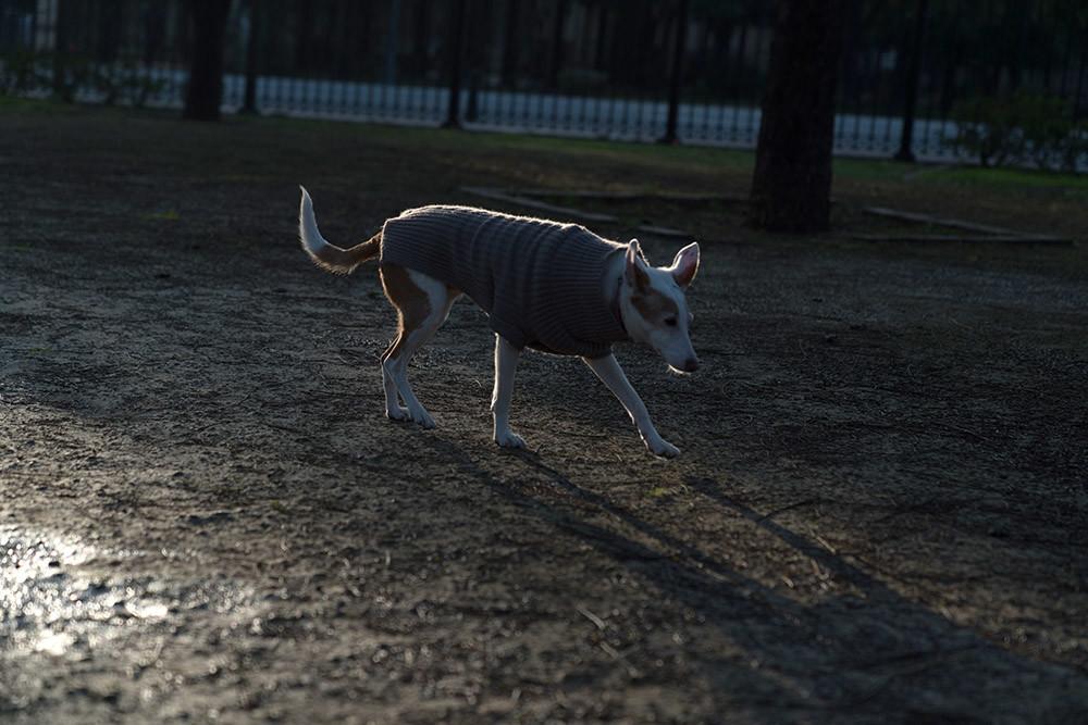 Foto de Sony A7R III (15/19)