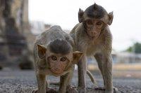 """Lopburi: La """"Ciudad de los monos"""" está en Tailandia"""
