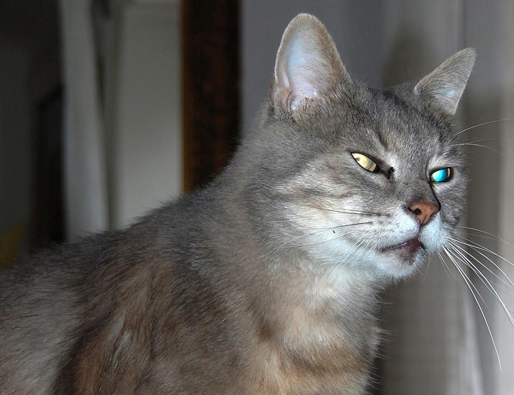 Como Fotografiar Mascotas I Gatos 8
