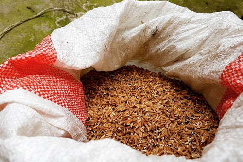 Todo sobre el arroz rojo: propiedades, beneficios y su uso en la cocina