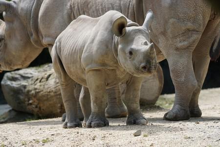 Rhino 892717 1920