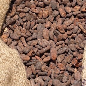 Cacao: beneficios para la salud y por qué esta semilla ancestral es tan importante para los mexicanos