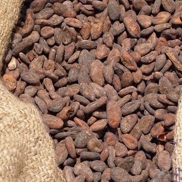 Cacao: ingrediente indispensable para la elaboración del chocolate con múltiples beneficios para la salud y la historia que lo ata a México