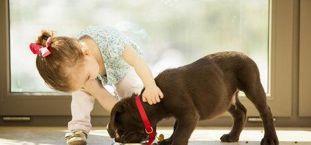 ¿Tu hijo ha pedido una mascota estas Navidades? Antes de cumplir sus deseos, medita la idea y piensa en la adopción