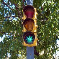 La marihuana reduce un 11% los accidentes mortales, según un estudio de la Universidad de Columbia