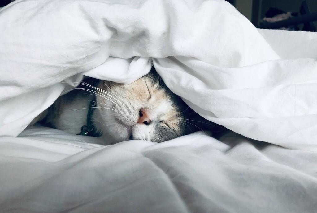 Los beneficios de las siestas y cómo hacerlas bien