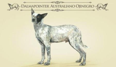 Dalmapointer Australiano Ojinegro