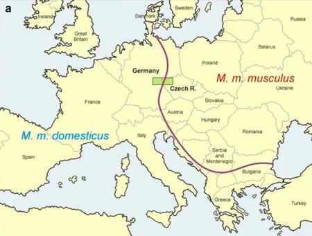 Mapa De Los Ratoncitos