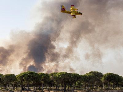 No, no puedes prender fuego a Doñana para construir unos apartamentos o un gaseoducto