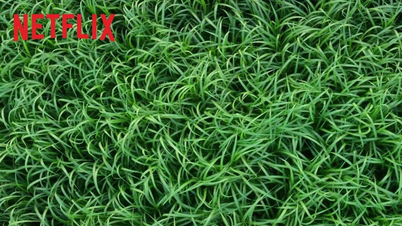 Tráiler de 'En la hierba alta': Netflix presenta la adaptación de Stephen King y Joe Hill del director de...