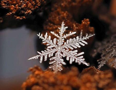 Los Snowflakes de Andrew Osokin