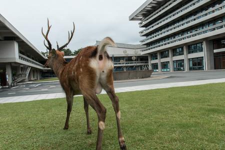 Planet Deer Yoko Ishii 10