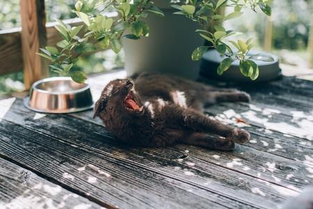 Toxoplasmosis: ¿de verdad tengo que deshacerme de mi gato y renunciar al jamón si estoy embarazada?