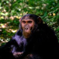 Gracias a un retrovirus dejamos de ser primates: el papel de los virus en la evolución humana