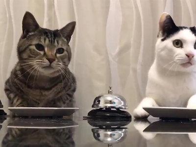 La lógica detrás del vídeo de los gatos que llaman a un timbre para obtener comida de su amo