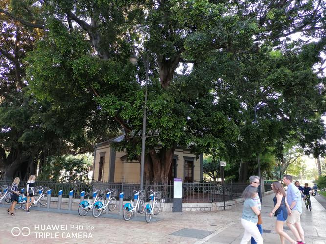 Foto de Fotos tomadas con el Huawei P30 Lite (51/153)