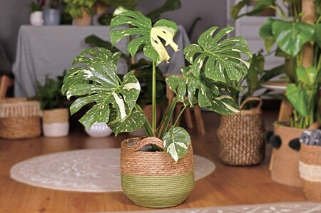 Cómo cuidar las plantas tras el verano
