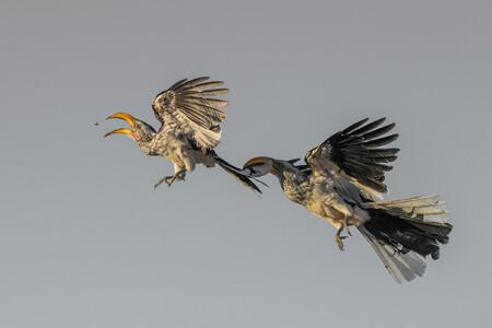 Web Birdsinflight Bronze Hanneslochner
