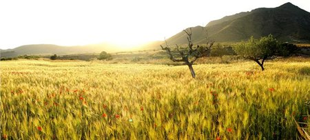 Cereales campo