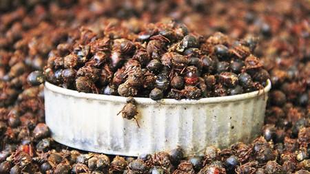 Salsa de chicatanas de Oaxaca. Receta de Cocina Tradicional Mexicana