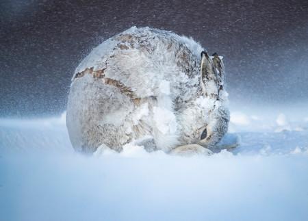 Estas impactantes fotografías de naturaleza son las ganadoras del concurso BigPicture: Natural World Photography 2020