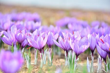 Azafran Flores