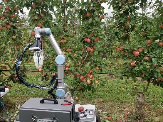 Un robot autónomo capaz de recolectar manzanas: la idea de unos investigadores para solucionar la falta de agricultores en Australia