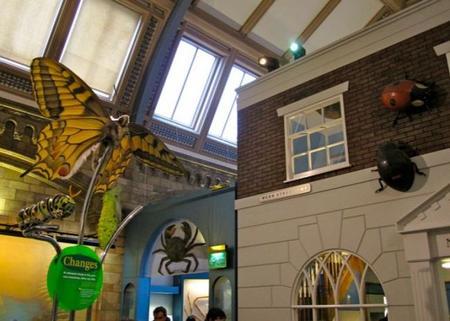 Insectos en el Natural History Museum