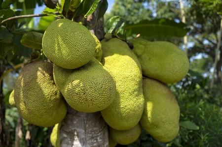 Jackfruit 2108869 1280