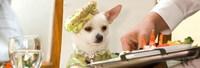 Taquilla USA: el chihuahua puede con el remake de '[Rec]' y Ridley Scott
