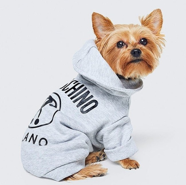 H&M apuesta por la ropa para perros también en sus colaboraciones: así lucirán vestidos de Moschino