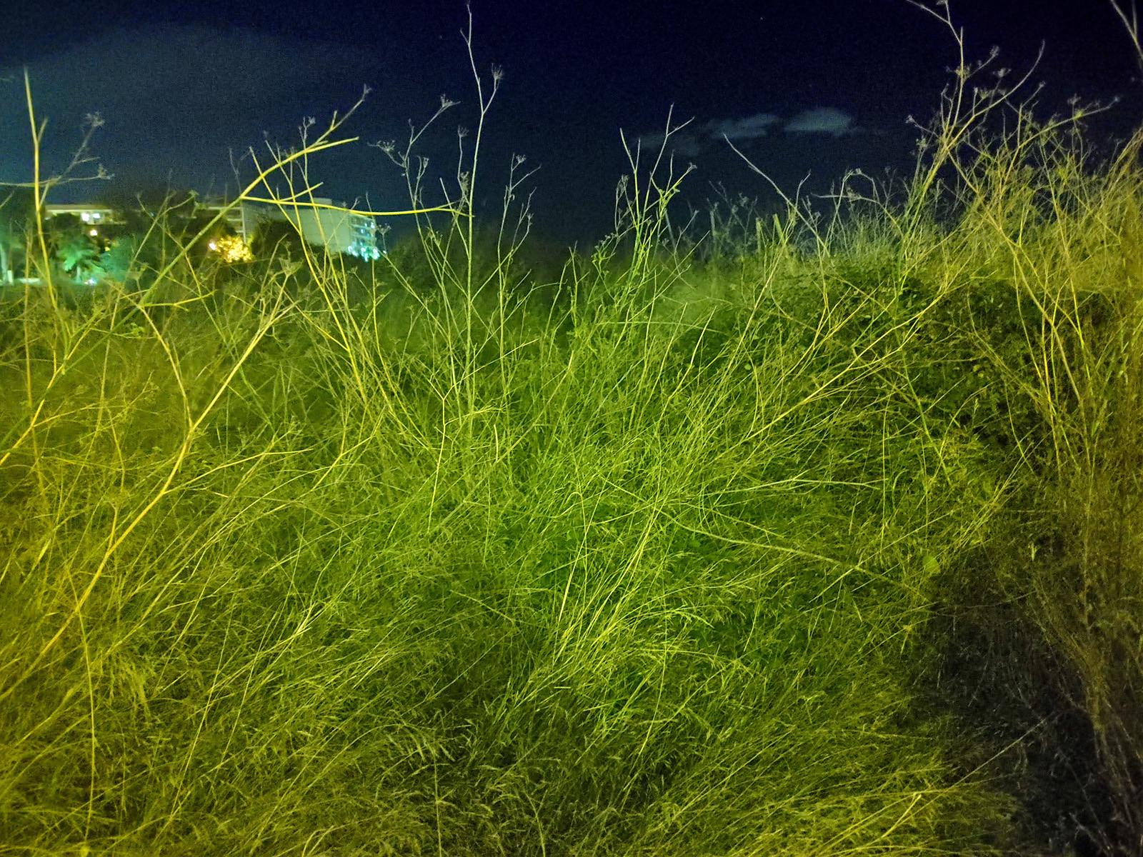 Foto de LG G8X ThinQ, galería (16/46)