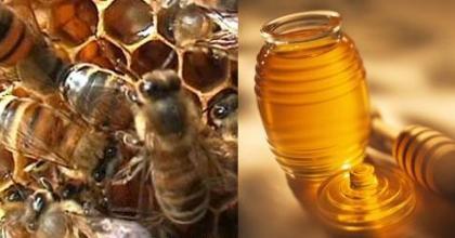 ¿Nos vamos a quedar sin miel?