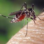 ¿Y si los terroristas dejaran de poner bombas y usaran mosquitos genéticamente manipulados?