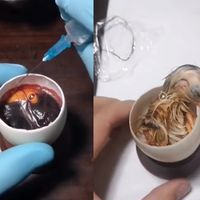 Así es como crece un pollo dentro de un huevo abierto: la ciencia que hay detrás de un vídeo tan espectacular como comprometido
