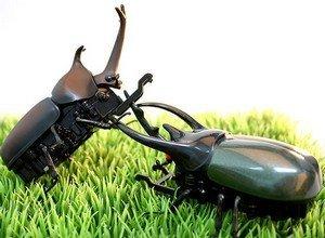 Escarabajos a radiocontrol
