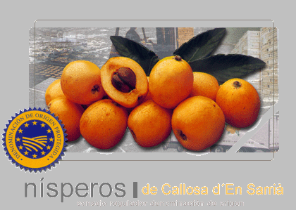 nisperos_do_callosa.PNG