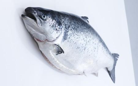 Foto Salmon Entero