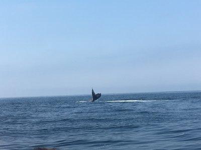 Así de impresionante fue mi encuentro con las Ballenas Jorobadas en Puerto Vallarta, Jalisco