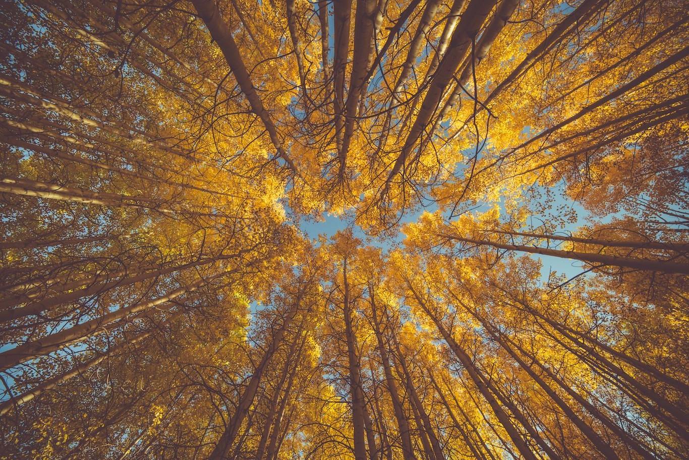 15 consejos para mejorar las fotografías de paisajes otoñales